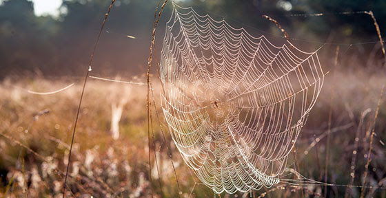 image of spider's web in field
