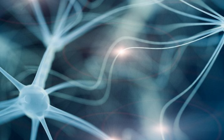 3d image of neurons