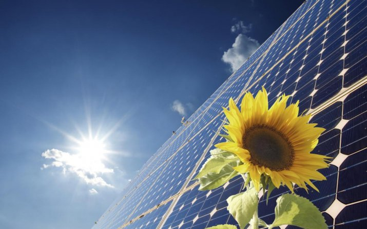sunflower in front of solar panels