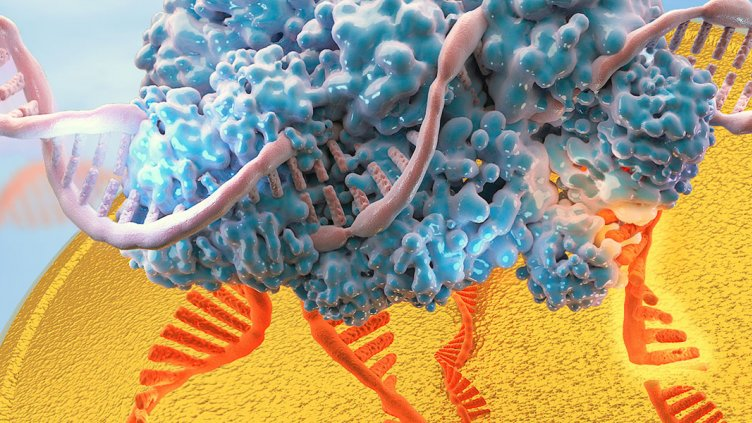 Double helix being spliced by CRISPR technology